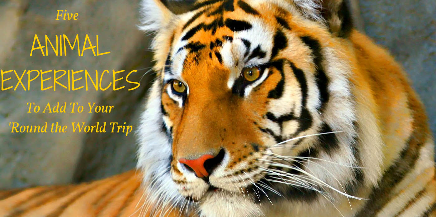 Five Animal Experiences To Add To Your 'Round the World Trip